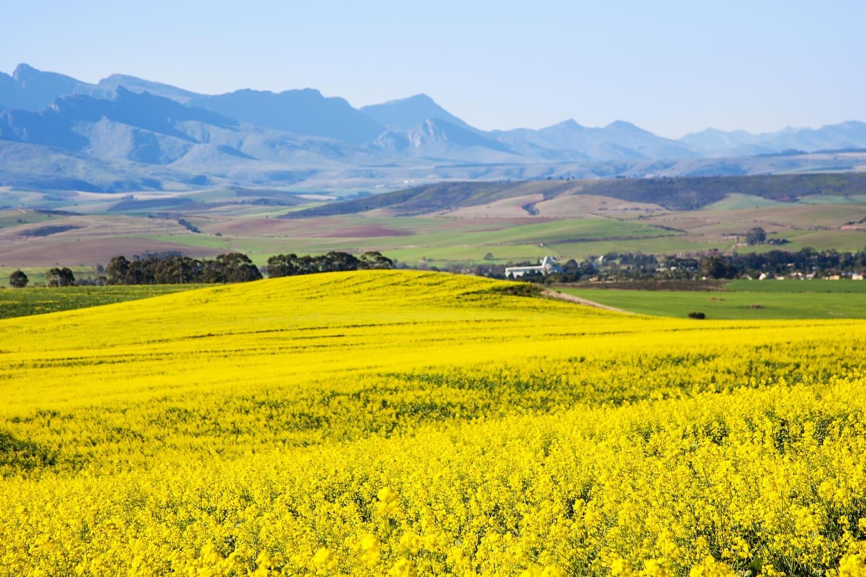 Cape Town Garden Route