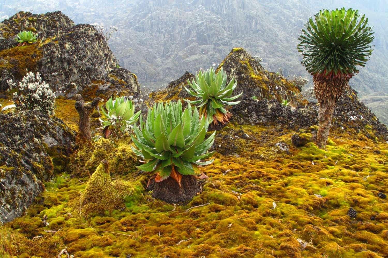 Hiking in Rwenzori Mountains National Park Uganda
