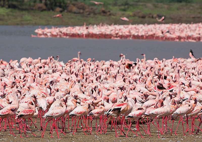 Znamenitosti Kenije