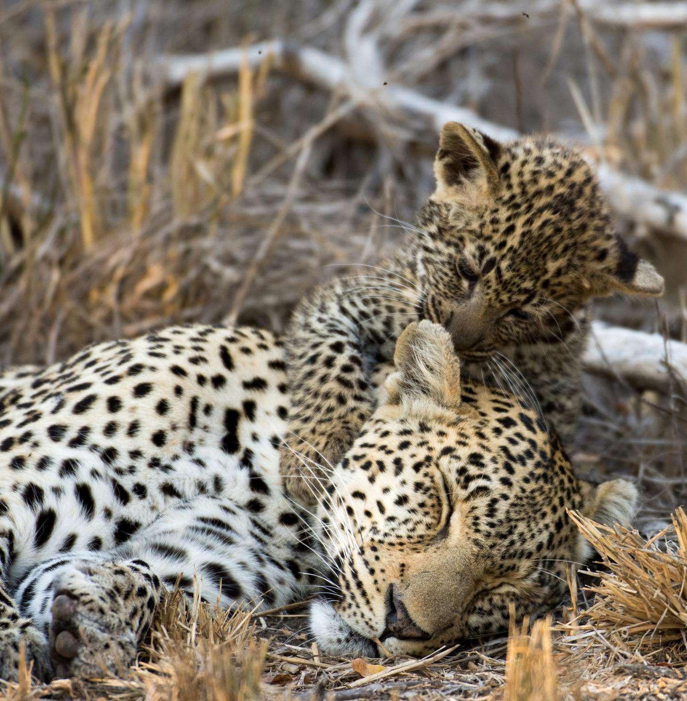 Национальные парки и заповедники Южной Африки