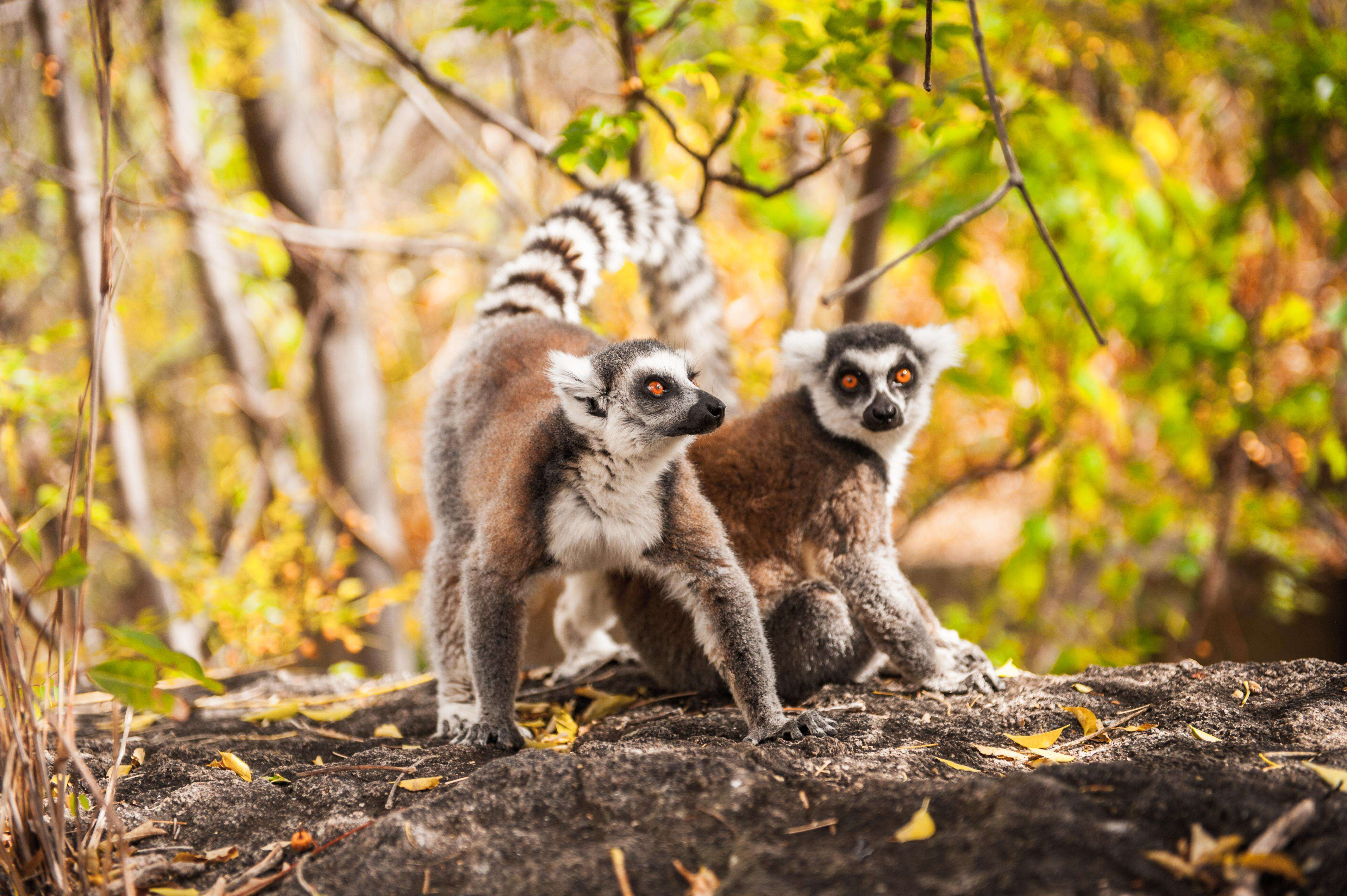 Madagascar wildelife