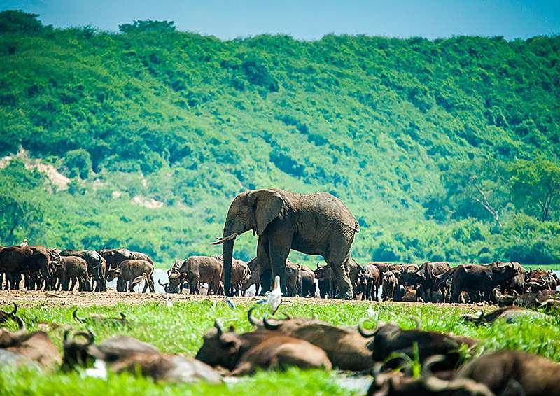 Потрясающая дикая природа Уганды