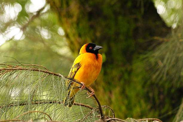 ethiopia bird watching