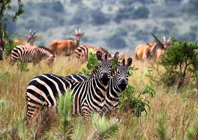 Дикая природа Руанды