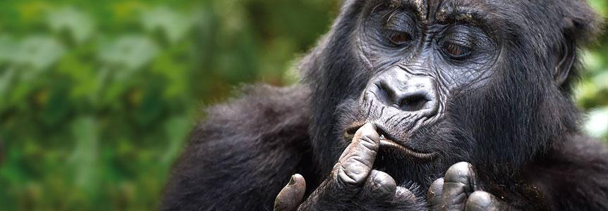 Походы к Гориллам Руанды