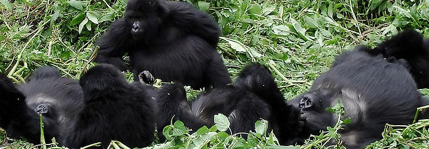 Походы к Гориллам и Сафари Руанды