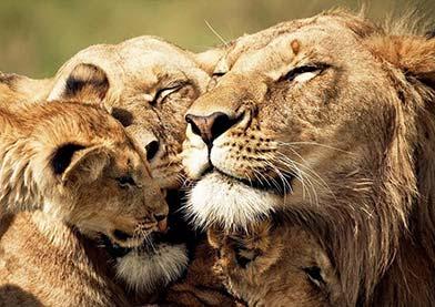 дикая природа Танзании