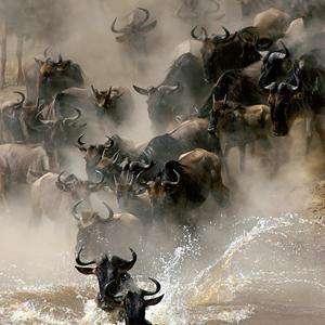 Wild Migration