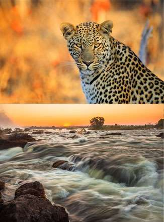 Wildlife of Zimbabwe