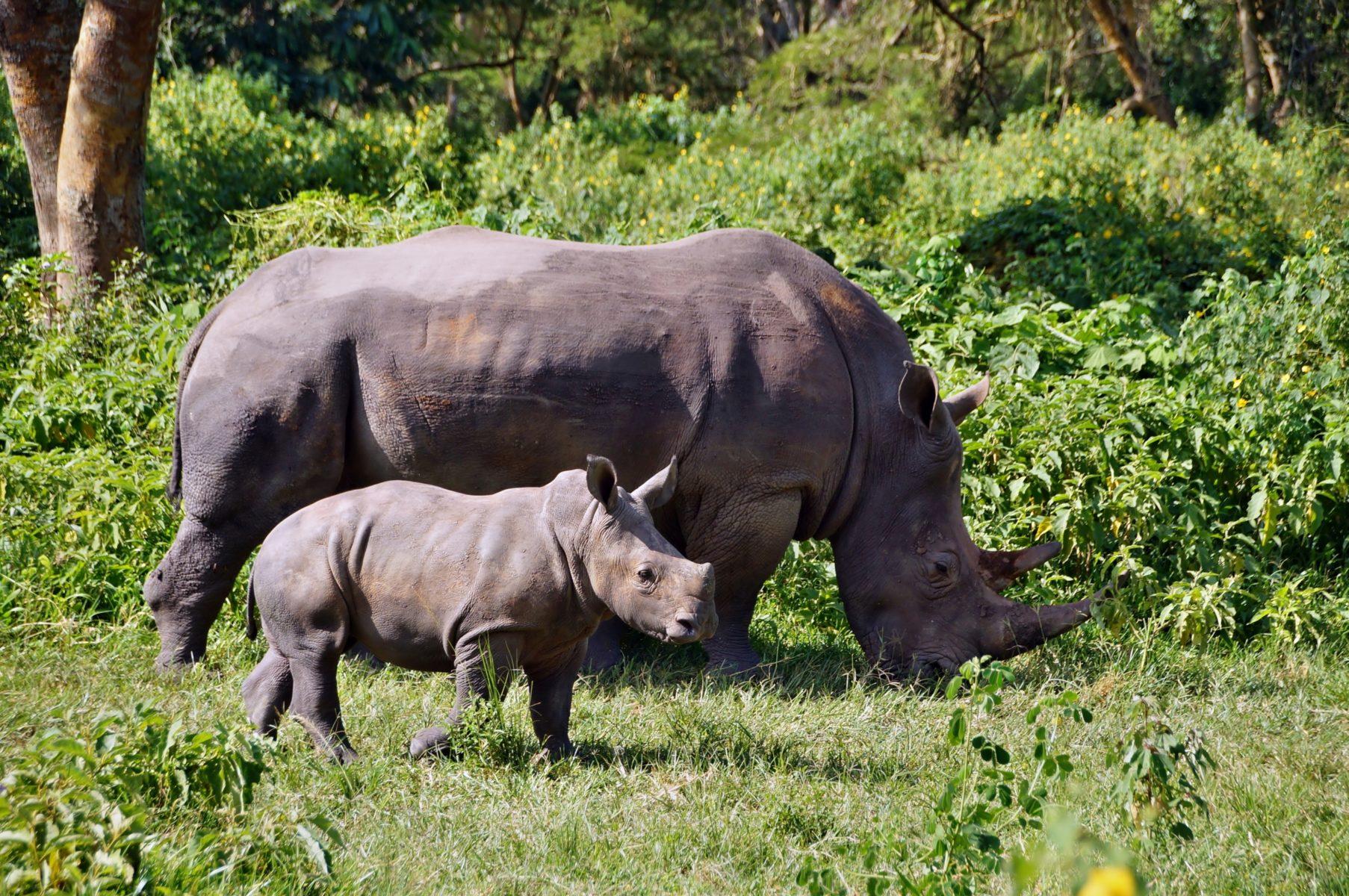 заповедник Зива носороги