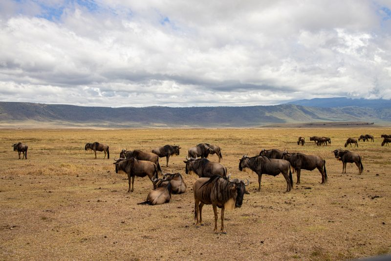 Things to do in Arusha: Tours & Day Trips from Arusha