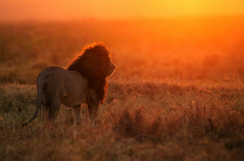 Why is Tanzania the Top Safari Destination in Africa? 10 Reasons to Visit Tanzania in 2020