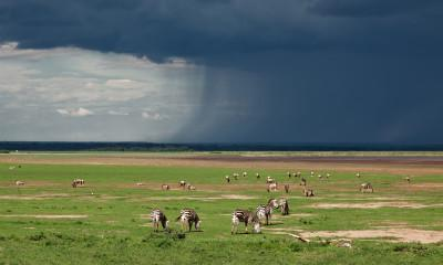 Everything You Need to Know About Ngorongoro