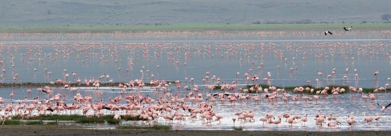 lake manyara national park flamingoes