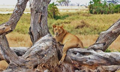 Tanzania Among Top 5 World's Most Stunningly Beautiful Countries To Visit