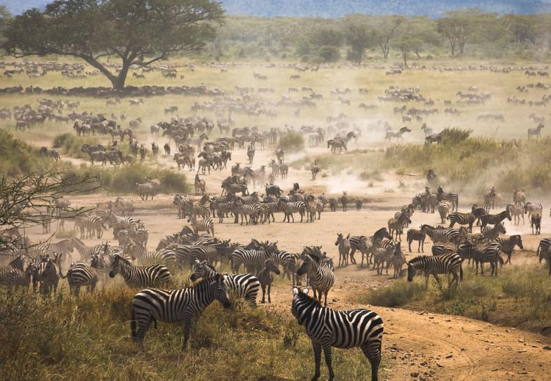 great migration kenya