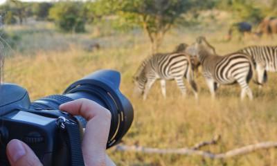Safari Photos From Tanzania #5