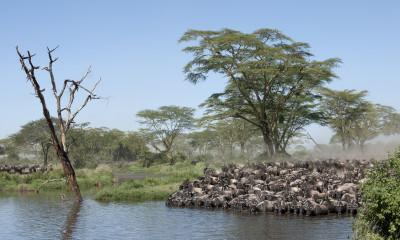 Everything You Need to Know About Lake Manyara National Park