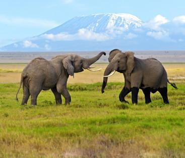 Background_Amboseli_2