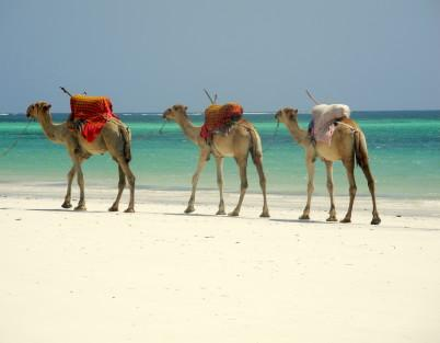 Kenya_Coast_Small (2)