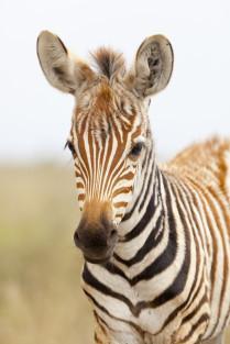 Kenya_NP_small_2