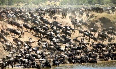 The Wildebeest Migration of Kenya and Tanzania