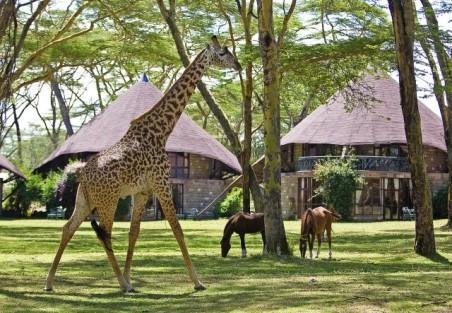 phoca_thumb_l_giraffe_and_horses_in_the_gardens