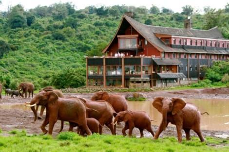 the_ark_elephants-lo