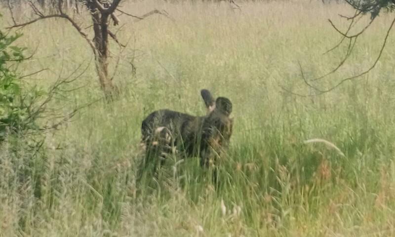 african wild dog serengeti 2