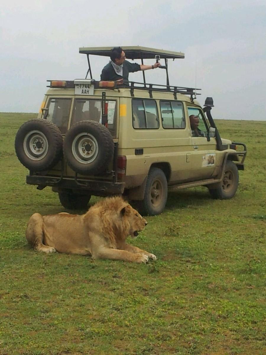Lion safari vehicle