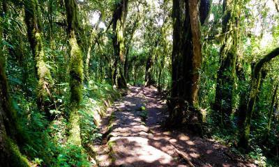 hiking kilimanjaro lowlands green