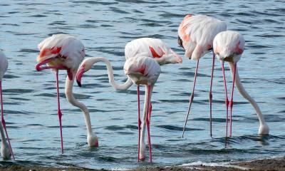 flamingos ngorongoro