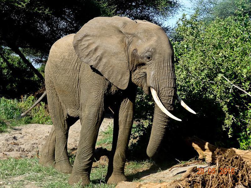 elephant lake manyara