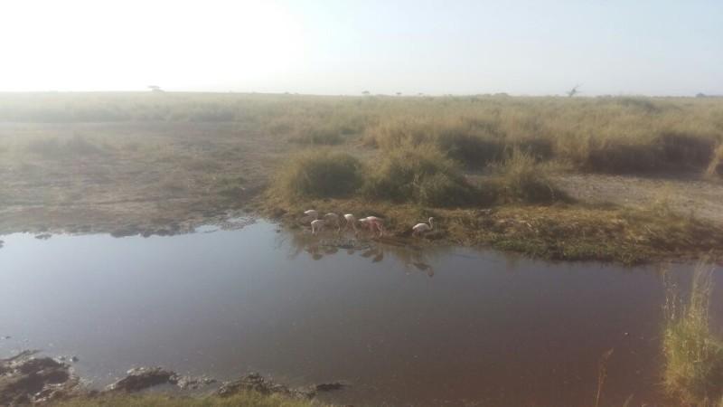 Flamingoes Serengeti
