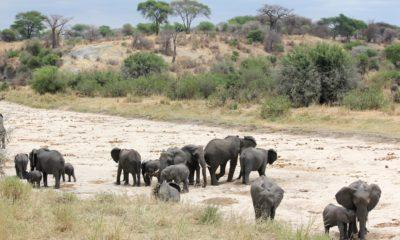 Safari Part 1: Tarangire National Park
