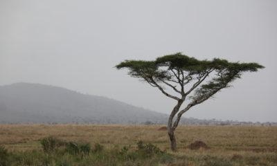 Safari Part Two: Serengeti National Park