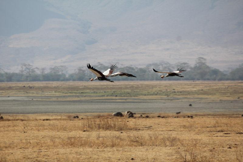 Birds Ngorongoro