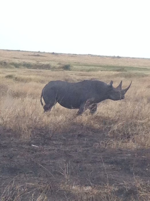Black Rhino Serengeti