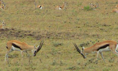 Safari Photos from Ngorongoro to the Serengeti
