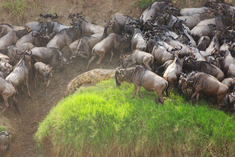миграция сафари