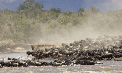 When and Where to see the Wildebeest Migration