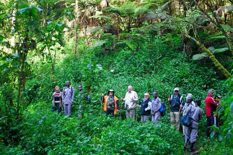 руанда гориллы поход
