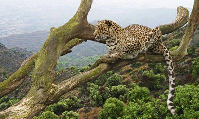 Serengeti, Ngorongoro and Manyara Safaris