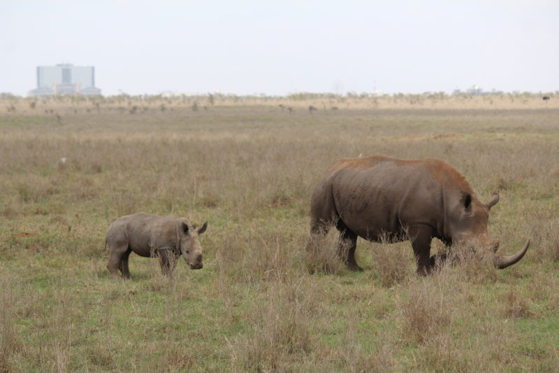 nairobi-rhinos-kenya