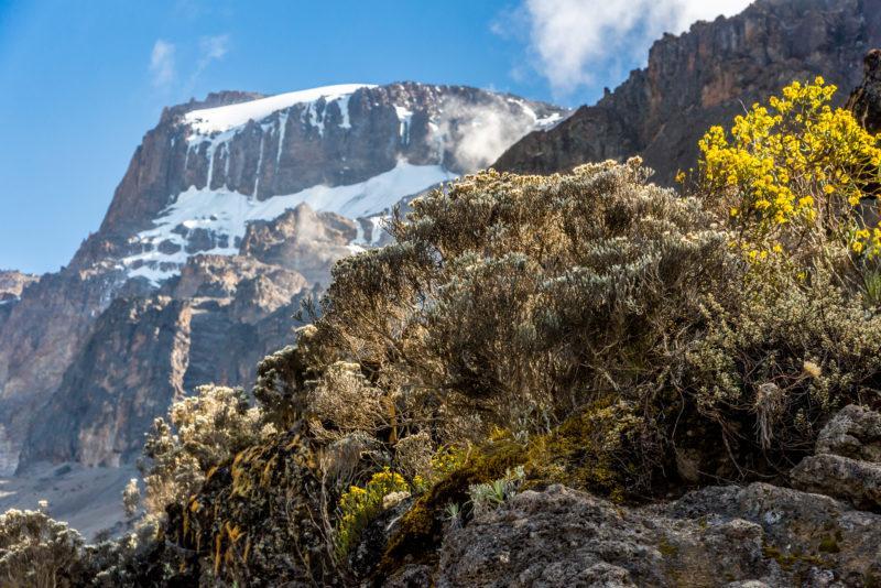 kilimanjaro tanzania africa