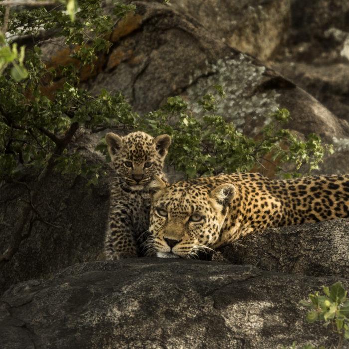 big 5 tanzania safari