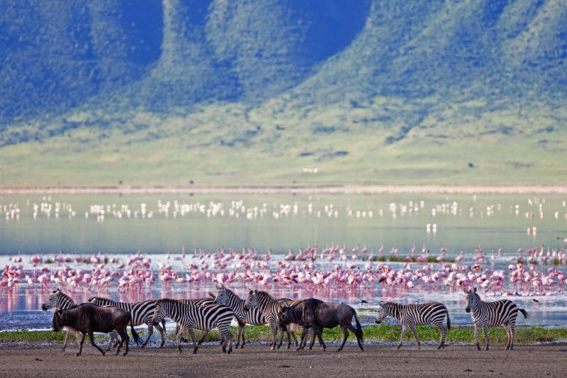ngorongoro flamingoes