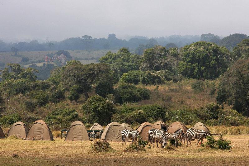 camp tanzania safari