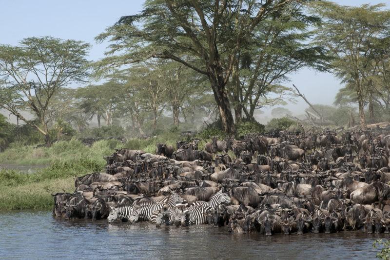 serengeti-tanzania-migration