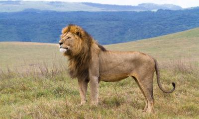 The Ilchokuti's of Ngorongoro Conservation Area